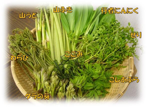 山菜,こごみ,タラの芽,わらび,行者にんにく